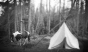 Wilderness Wanderings