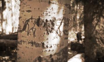 Pack Horse Arborglyph